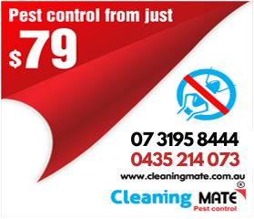 carpet cleaning pest control