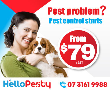 pest control brisbane for $79